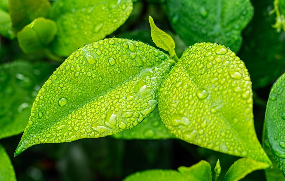 Tre gode råd til, hvordan du kan blive grønnere i din hverdag