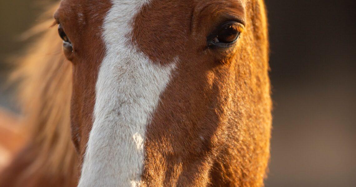Du vil elske denne side, hvis du godt kan lide heste